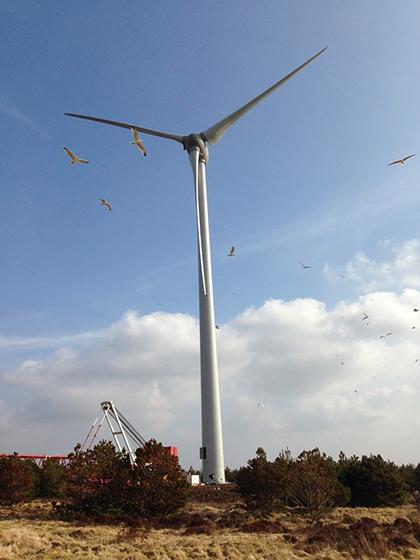 Seagulls at the new turbine